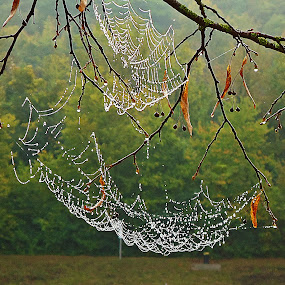 by Sigitas Baltramaitis - Nature Up Close Webs