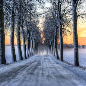 Where Roads Have No Name II by Manu Heiskanen - Uncategorized All Uncategorized ( car, pointofview, street, winterroad, symmetri, assymetry, alle, paulinawolekpardon, lights, winter, sunset, ice, trees, symmetry )