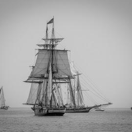 Talls Ships 3 by Tina Hailey - Transportation Boats ( water, tall ships, black and white, tinas captured moments, boats, duluth mn, transportation )