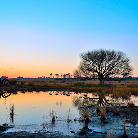 Awakenings by Dave Ross - Landscapes Waterscapes ( water, willows, dawn, wetlands, sunrise )