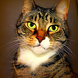 Posing by Laura Horne - Animals - Cats Portraits
