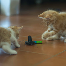 Rechargable ? by Annette Flottwell - Animals - Cats Kittens ( marmelade, ginger, gatitos, kttens )