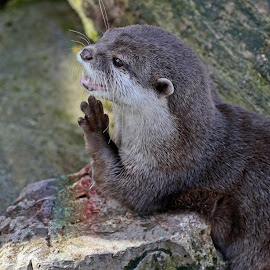 Praying by Deleted Deleted - Animals Other Mammals