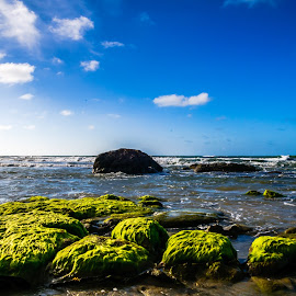 Mosses by Ted Khiong Liew - Landscapes Waterscapes ( #blue sky #beaches #water #mosses )