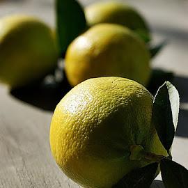 lemons by Alka Smile - Food & Drink Fruits & Vegetables