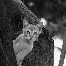 b&w by Afik Razanafi - Animals - Cats Kittens ( blackandwhite, b&w, d3100, kittens, nikon, eye )