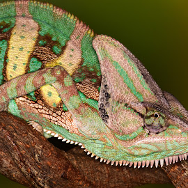 by Terry DeMay - Animals Reptiles