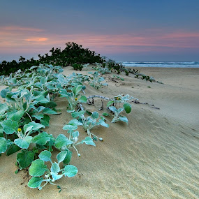 Dune by Bruce Meaker - Landscapes Beaches