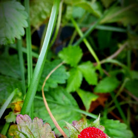 by Cecilia Sterling - Nature Up Close Gardens & Produce