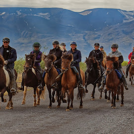 Evening riding on Islandic horses by Michaela Firešová - Sports & Fitness Other Sports ( ride, horses, evening, riders,  )