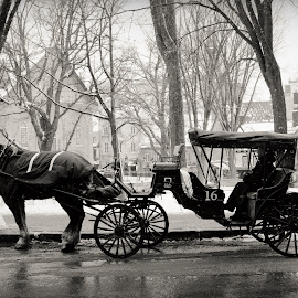 ... by Mélanie Fournel - City,  Street & Park  Street Scenes ( carriage, black and white, horse, street, photography,  )