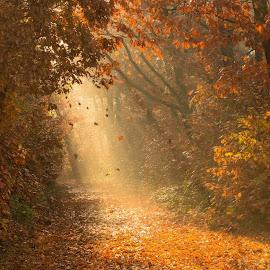 Autumnleaves by Hans Franken - Landscapes Forests
