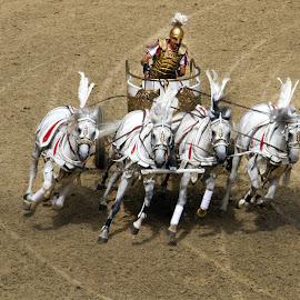 puy des fous romens by Franky Vanlerberghe - Animals Horses ( spectacel, romeinen, ben hur, holliday parc )