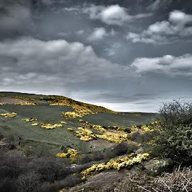 yellow fields by Jason Smith - Landscapes Prairies, Meadows & Fields ( scotland, yellow, landscape, spring, fields )
