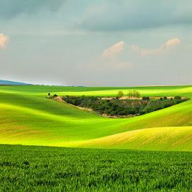 Czech Republic, South Moravia by Vladimir Vocelka - Landscapes Prairies, Meadows & Fields ( field, jaro, south moravia, czech republic, landscape )