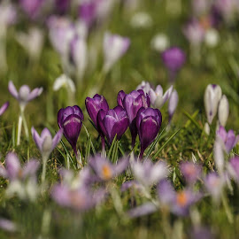 Garden by Srinath Reddy - Nature Up Close Gardens & Produce ( purple, grass, green, plants, mood, yellow, flowers, the mood factory, garden, emotion, renewal, trees, forests, nature, natural, scenic, relaxing, meditation, emotions, jade, revive, inspirational, earthly )