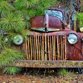 Hidden Away by Steve Brooks - Transportation Automobiles ( pender county north carolina, north carolina landscape photography, old cars, old truck )