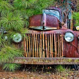 Hidden Away by Steve Brooks - Transportation Automobiles ( pender county north carolina, north carolina landscape photography, old cars, old truck )