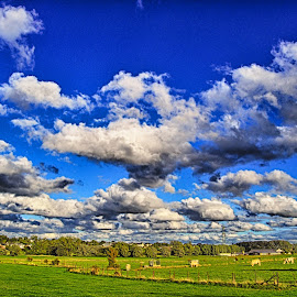 Cows & Clouds by Marco Bertamé - Landscapes Weather