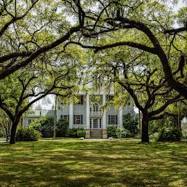Plantation Lawn by Roy Walter - Landscapes Travel ( charleston, house, plantation, live oakes, historic )