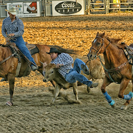 Steer Wrestling by Twin Wranglers Baker - Sports & Fitness Rodeo/Bull Riding