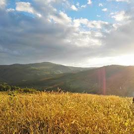 Gold field by Florincas Ciprian - Landscapes Prairies, Meadows & Fields ( field, autumn, sunset, nature up close, landscape )