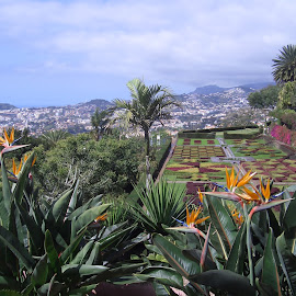 Funchal its a Garden by João Ascenso - Landscapes Travel ( garden, flower )
