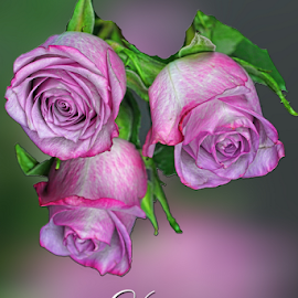 Happy Mother's Day by Dipali S - Typography Captioned Photos ( optical, optics, illustration, motivation, type, decor, inspiration, calligraphy, card, pink, mother's day, place, template, element, text, creative, letter, font, art, label, calligraphic, sign, frame, roses, poster, word, typography, letters, headline, graphic, ornate, decorative, captioned, title, words, quote, inscription, classic, note, banner, typographic, abstract, icon, vintage, decoration, advertisement, photo, message, motivational, typo, background, artistic, design )