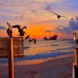 { Pirate Cove ~ Off Clear Water Beach Fl, }  by Jeffrey Lee - Digital Art Animals ( }, { pirate cove ~ off clear water beach fl )