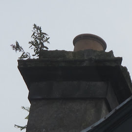 Unused chimney by Vicki Clemerson - Buildings & Architecture Architectural Detail ( grass, unused, weeds, decayed, chimney, abandoned )