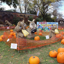 Eating by Lenora Popa - Public Holidays Halloween ( holiday, fall, pumpkins, hay sculpture, halloween )