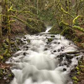Waterfall in Oregon by Kathy Dee - Nature Up Close Water ( park, nature, green, waterfall, moss, rocks, woods, river )