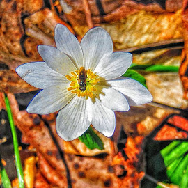 Pollination by Diane Merz - Digital Art Things