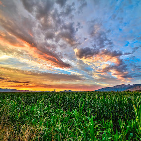 Corn and clouds by Glenn Pearson - Landscapes Sunsets & Sunrises