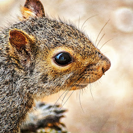 Way Too Close by Pat Lasley - Animals Other Mammals ( mammals, animals, squirrels, wildlife, squirrel,  )