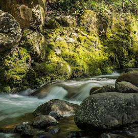 Maui river by Pierre Tessier - Landscapes Forests ( maui river,  )