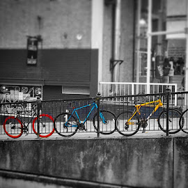 Primary Bicycles  by Pip Holden - Transportation Bicycles ( primary colours, bicycles, red, blue, yellow,  )