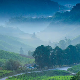 The Valley of Cameron Highlands by Joseph Law - Landscapes Mountains & Hills