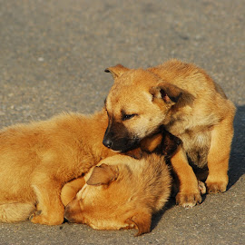 pups by Vin Shutterbug - Animals - Dogs Puppies ( puppies, pups, sweet pups, little pups, little dogs )