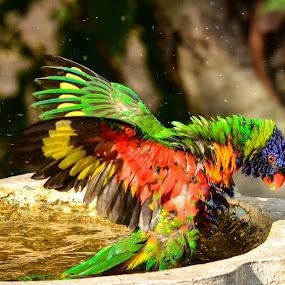 Such fun by Jason Day - Animals Birds