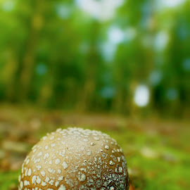 by Mark Cauchi - Nature Up Close Mushrooms & Fungi