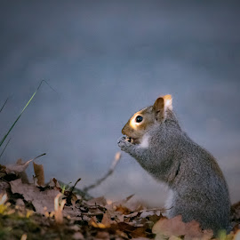 Taking a peek by Sue Delia - Animals Other ( peeking, squirrel,  )