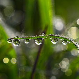 water droplet by Muhamad Lazim - Nature Up Close Other Natural Objects ( dew )