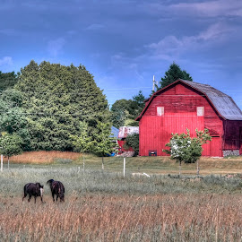 Barn with Horses by Fraya Replinger - Buildings & Architecture Other Exteriors ( farm, red barn, horses, barn, summer )