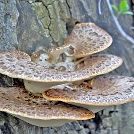 Mushroom by Jaliya Rasaputra - Nature Up Close Mushrooms & Fungi