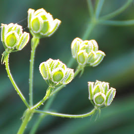by Terry Hannon - Nature Up Close Other plants