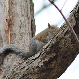 Peeping Squirrel  by Terry Linton - Animals Other