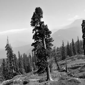 by Debanjan Goswami - Black & White Landscapes (  )