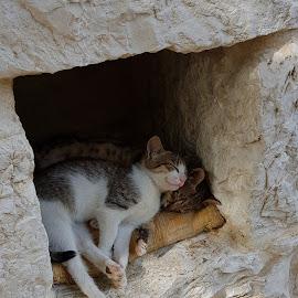 by Pia Torpman - Animals - Cats Kittens ( catnap, sleeping kittens, sovande kattungar, kittens, kattungar )