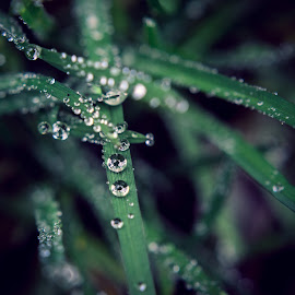 Natural Diamond by Jayanta Basu - Nature Up Close Leaves & Grasses ( water drops, nature, grass, green, beautiful, leaves )